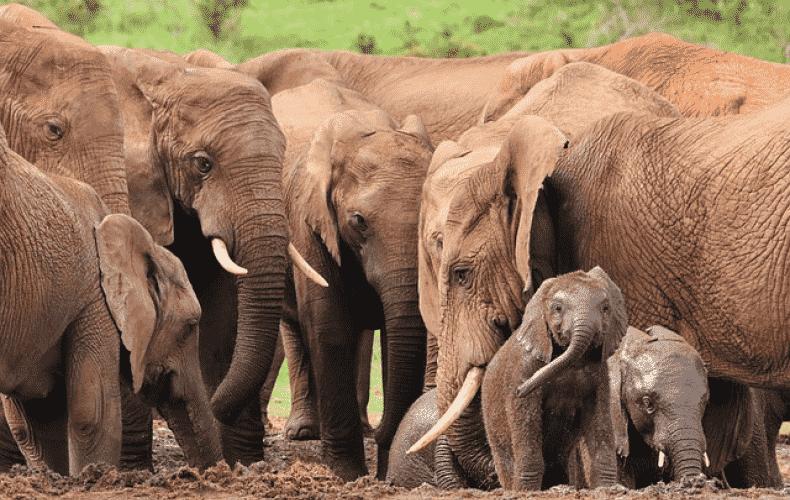 Unusual migration of elephants through China